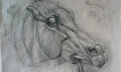 Horsehead - Long study
